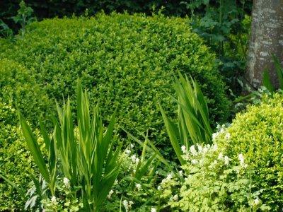 Store stedsegrønne
