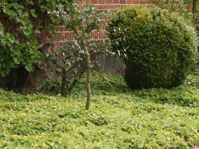 Bunddækkeplanter